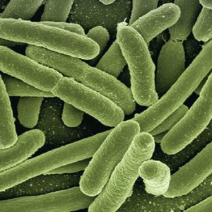 Bacteria | Eco Bear